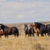 Wild Horses by Karen B. Shea