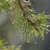 Rain Drop Web