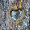 Tree Heart by Karen B. Shea